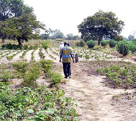 Adequació d'una zona de cultiu als afores del poble de Bantandicori.