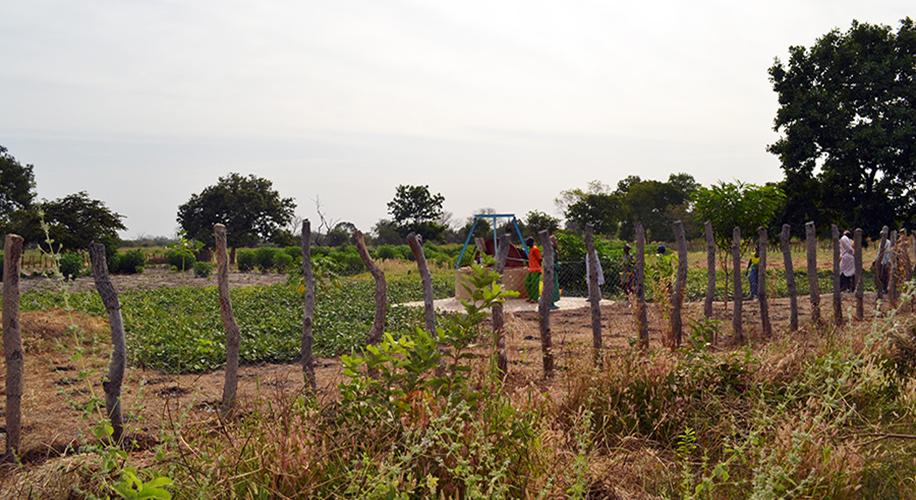 Tancament perimetral d'una zona de cultiu